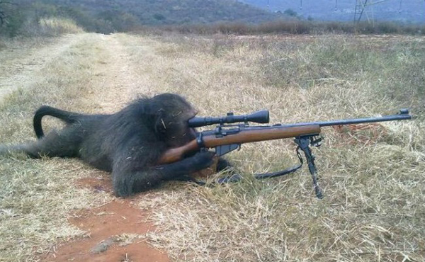 Monkey-with-a-rifle