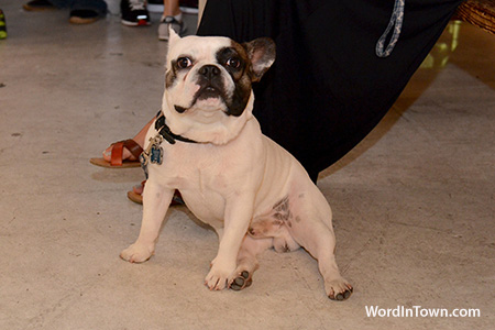 jipsy-castillo-solo-photo-exhibit-at-the-workshop-wynwood-miami-10-13-2012-photography-art-girls-5-french-bulldog