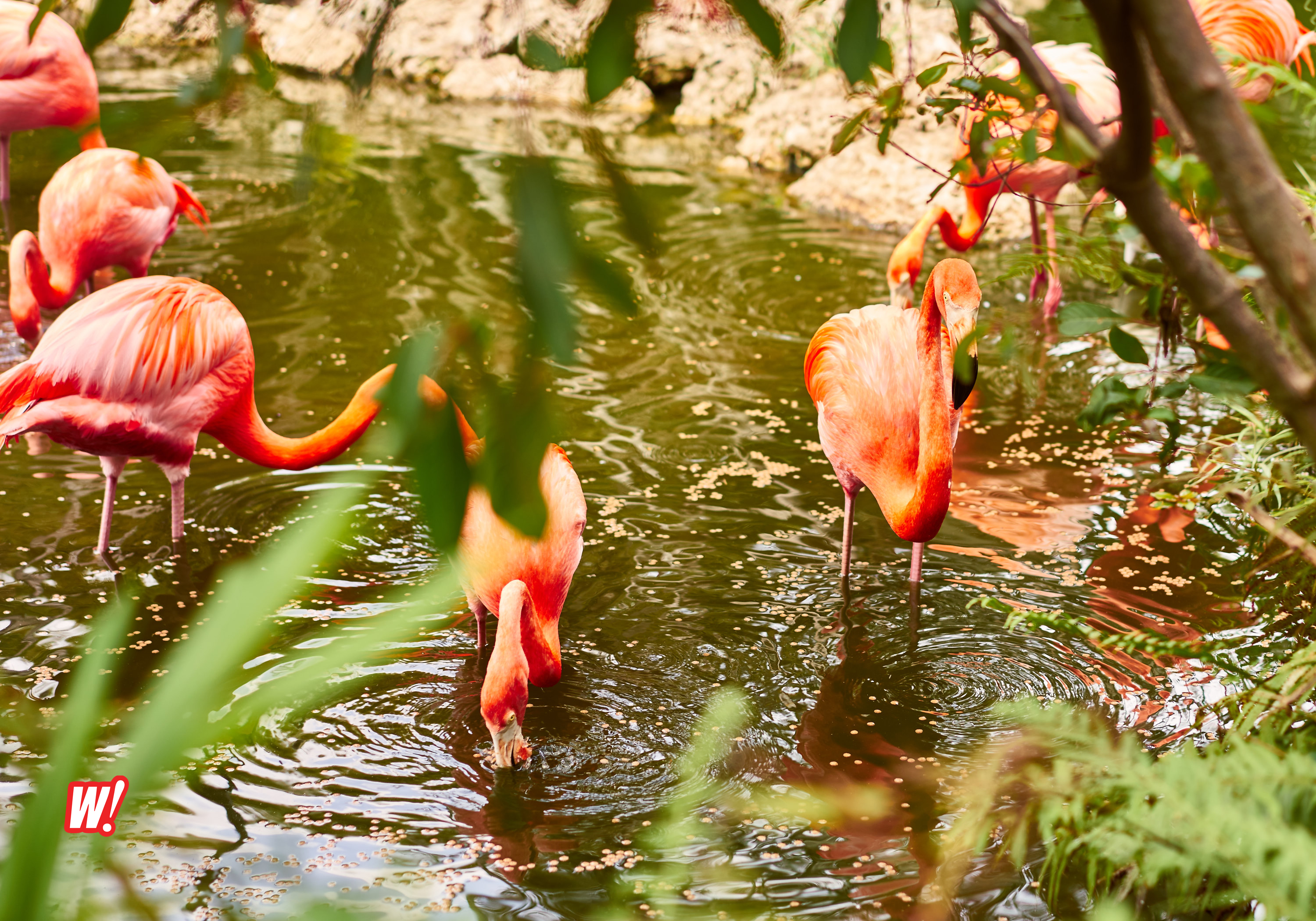Flamingo_Gardens_Davie_Eagle_Owo_Hawk_Birds_cages_wordintown_copyright_Jayromero_photography_davie_FL-flamingo-group