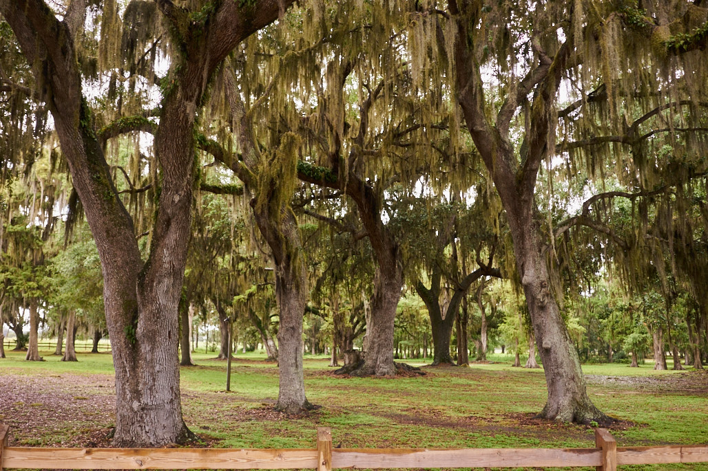 boggy_creek_kissimmee_jose_romero_photography_wordintown_trees_DSC08043