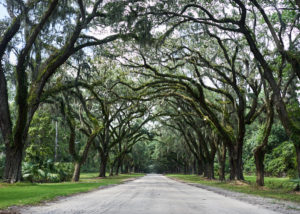 wormsloe_road_trip_to_savana_ga_jose_romero_photography_wordintown_2017_DSC04605